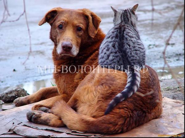 В Люберецком районе Подмосковья прошла акция в защиту бездомных животных