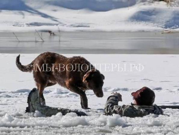 Самые преданные и верные собаки
