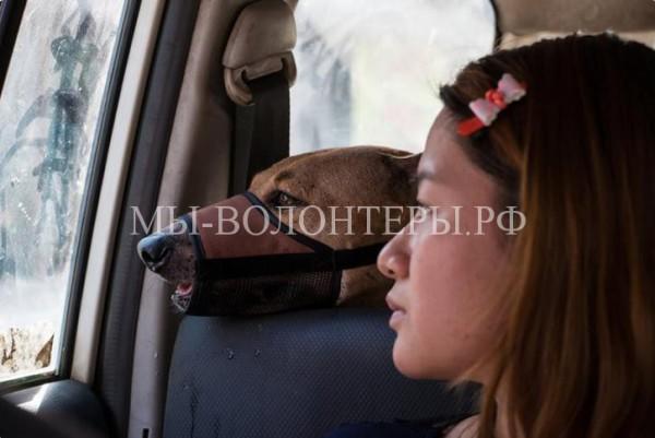 История о девушке из Мьянмы, которая спасает бездомных собак