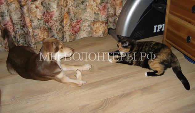 операция собаке с двойной лапой3