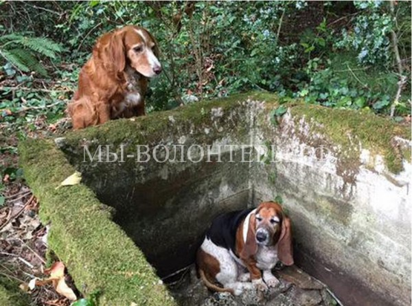 Собачья преданность: пёс целую неделю оставался рядом с попавшим в ловушку другом