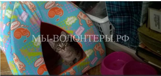 Петербуржцы спасли котенка, который четыре дня просидел в брошенной машине