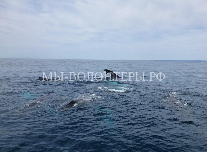 тюлень плывет на ките2