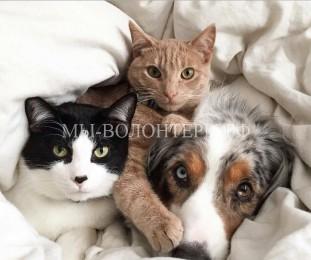 Дружба кошек и собак