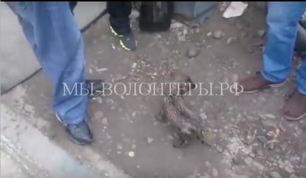 В Красноярске трое парней спасли щенка из канализации