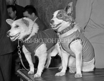 «Звездные собаки»: 55 лет полету Белки и Стрелки в космос