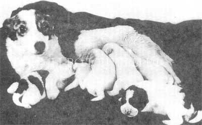 Белка и Стрелка космические собаки2