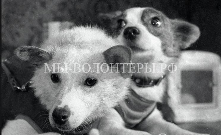 Белка и Стрелка космические собаки3