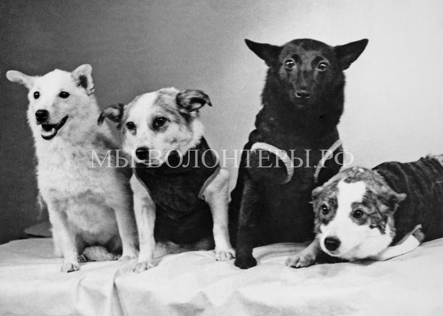 Белка и Стрелка космические собаки6