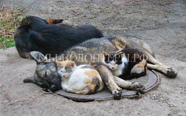 Прокуратура Хабаровского края выступила против усыпления бездомных животных