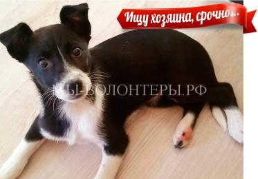 НАШЛА ХОЗЯИНА!  Срочно ищет хозяина очаровательная малышка — щенок в приюте Щербинка
