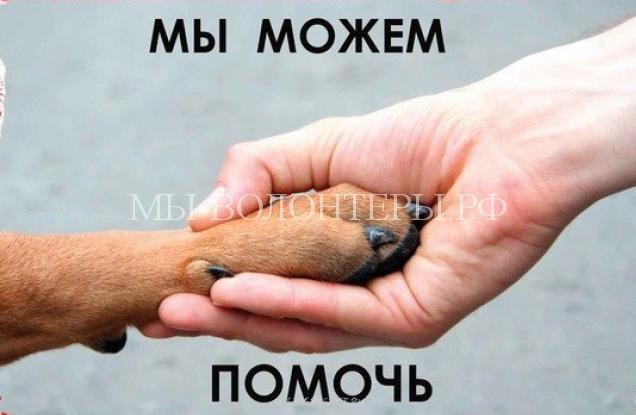 4 октября — Всемирный день защиты животных