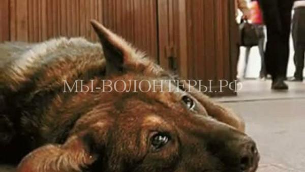 Около 2500 людей призывают остановить травлю животных в Барнауле