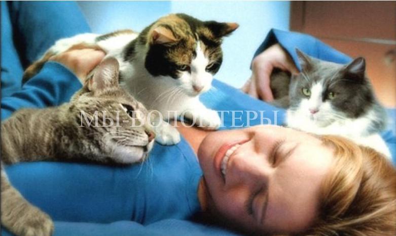 как кошки выражают свою любовь к человеку