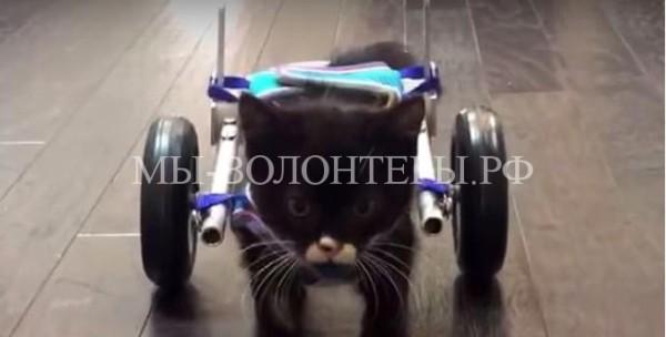 Котенок передвигается на инвалидной коляске, созданной 3D-принтером
