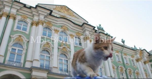 Эрмитаж раздал котов-мореходов и провел сеанс «кототерапии»