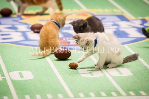 Чемпионат по кошачьему футболу — способ пристройства бездомных котят