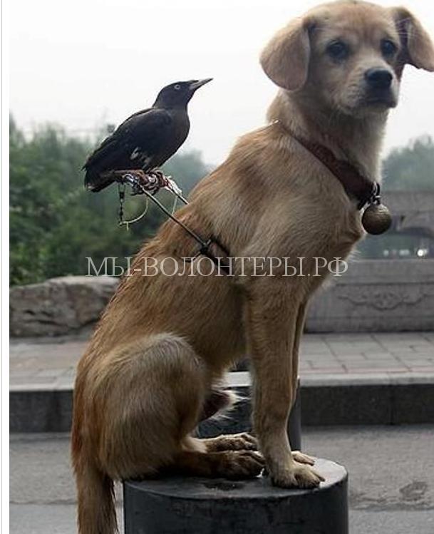 необычная дружба животных1