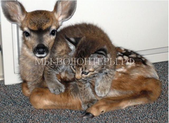 необычная дружба животных2