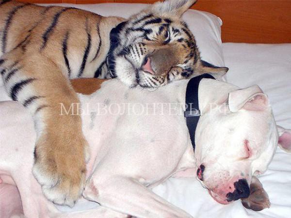 Самые необычные приятели в мире фауны