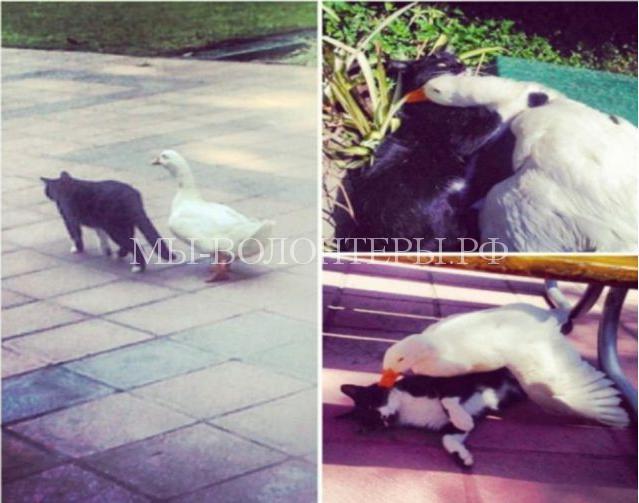 необычная дружба животных4