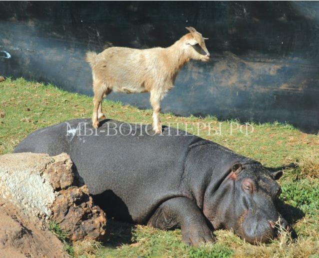 необычная дружба животных6