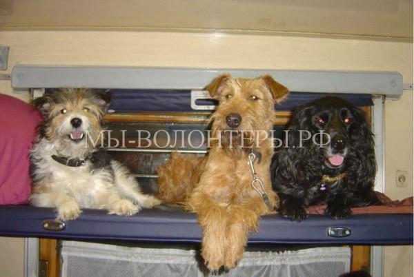 В плацкартных вагонах можно будет перевозить домашних животных