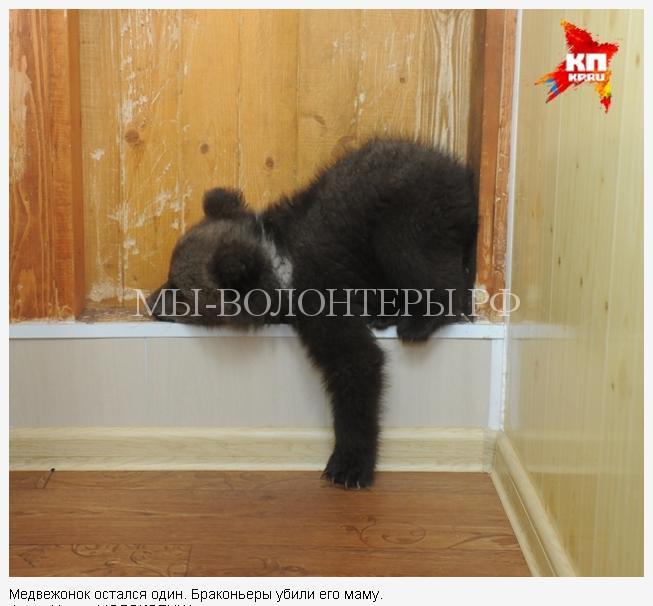 пермский медвежонок2