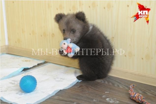пермский медвежонок3