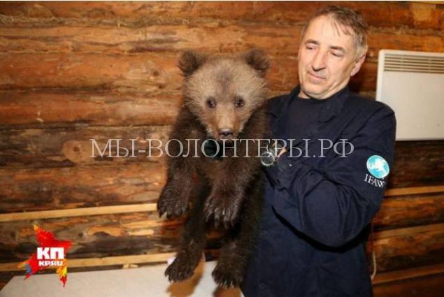 пермский медвежонок4