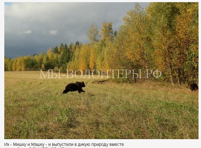 пермский медвежонок6