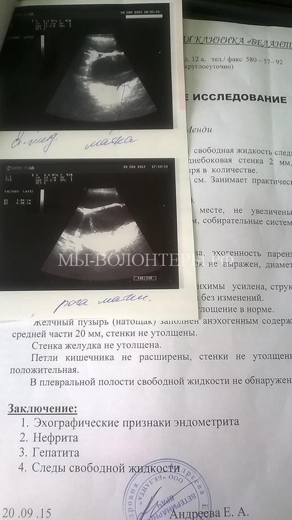 пиометра-собаки-операция-узи