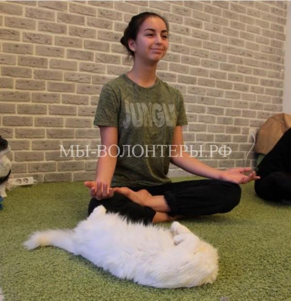 В котокафе «Мурзик» в Казани устроили йогу с котами (идея пристройства)