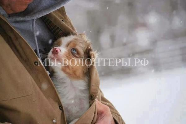 Фотографии, после просмотра которых вам непременно захочется завести собаку
