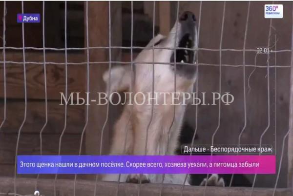Брошенные дачниками собаки попадают в приюты Дубны,Шереметьево каждый день