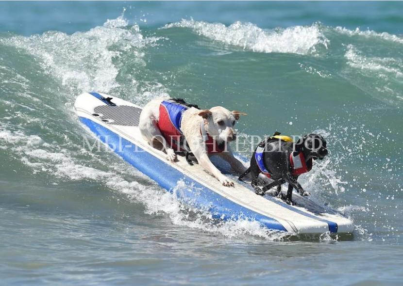 Собаки, покорившие волны