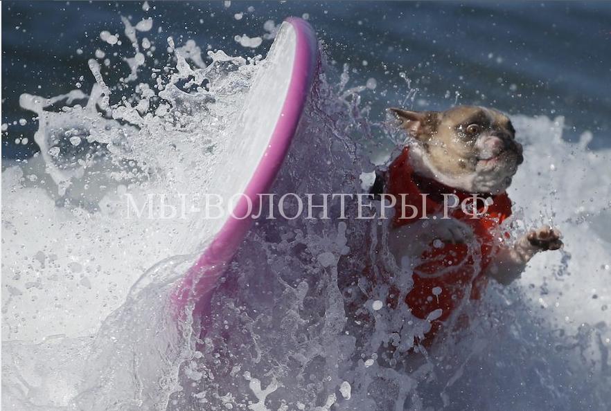 собаки покорившие волны11