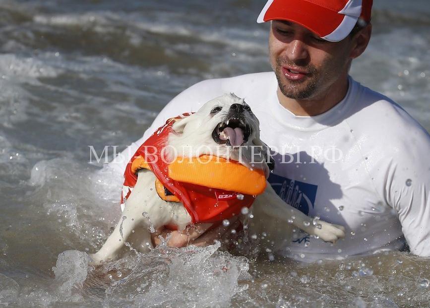 собаки покорившие волны14