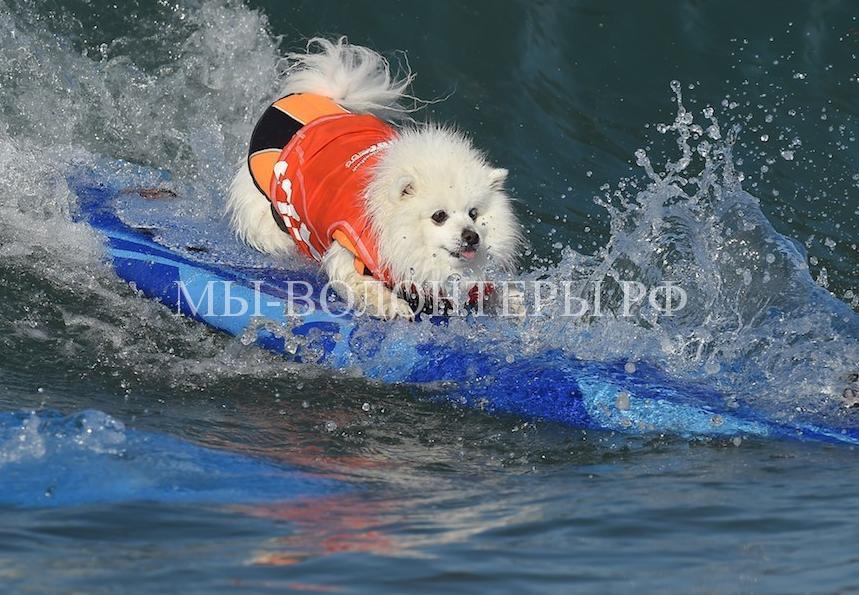 собаки покорившие волны3