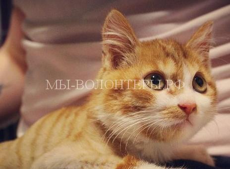Московский блогер спас искалеченного котенка из Улан-Удэ