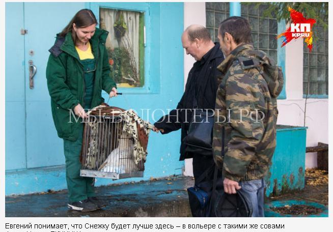 спасение полярной совы2