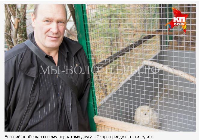 спасение полярной совы6