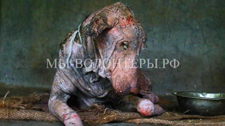 спасение умирающей собаки в Индии1