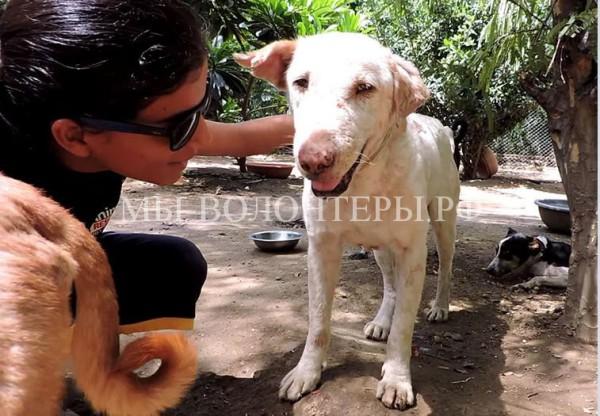 Спасение и восстановление умирающей собаки