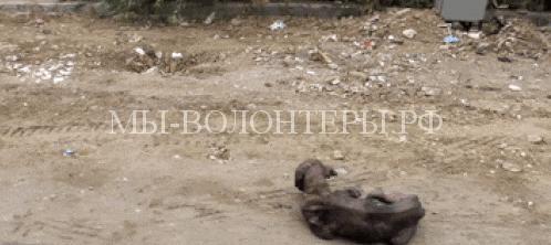 спасение умирающей собаки в Индии3