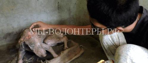 спасение умирающей собаки в Индии4