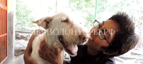 спасение умирающей собаки в Индии6