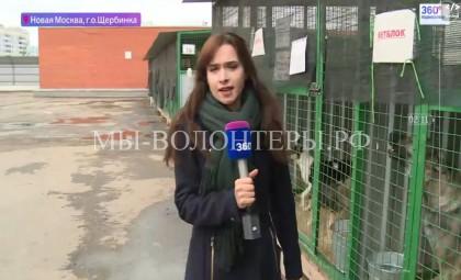 Приют «Щербинка»  — видеорепортажи 360tv.ru и  ТВЦ  после смены управляющей компании