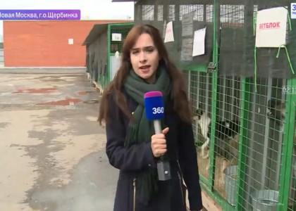 """Приют Щебинка, репортаж телеканалf """"360"""""""