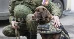 В Петербурге разработали новые бронежилеты для собак